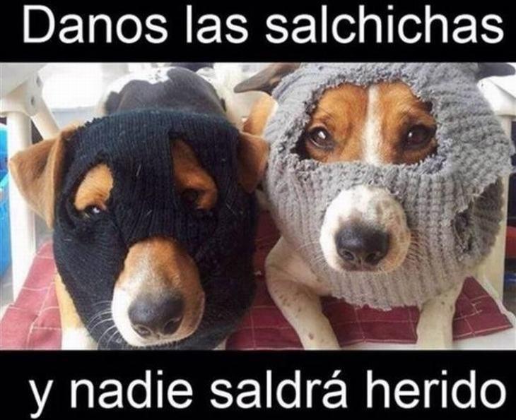 Ayuda ay perros ladrones que se quieren llevar mi salchicha - meme