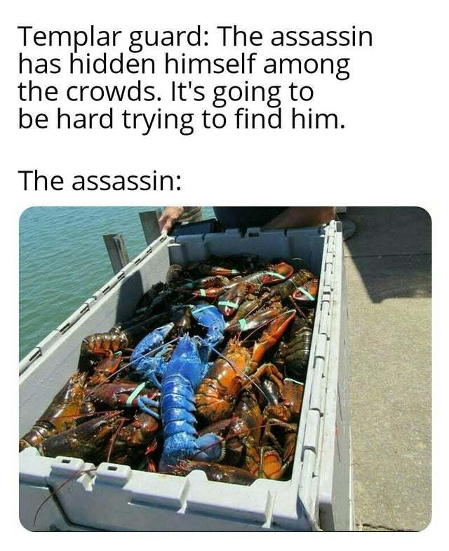 Spot the assasin - meme