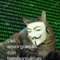 Datos inimaginables  con el gato de anonymus