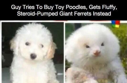 A fluff is a fluff - meme