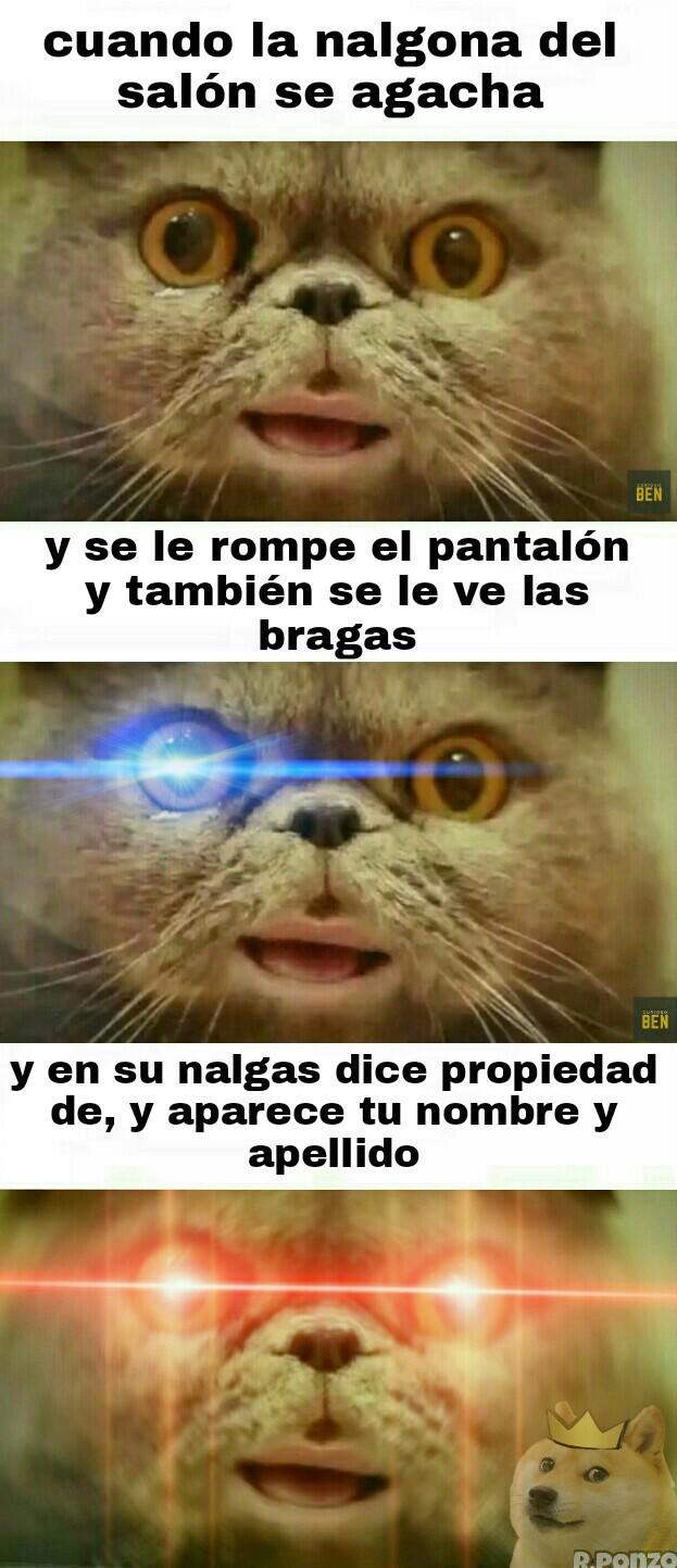 El gato benny - meme