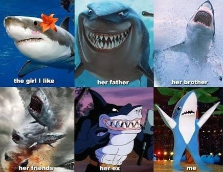 Shark love story - meme