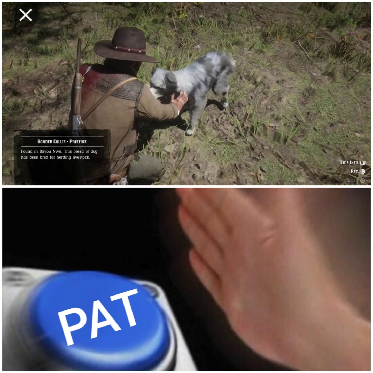 Must pat doggo - meme