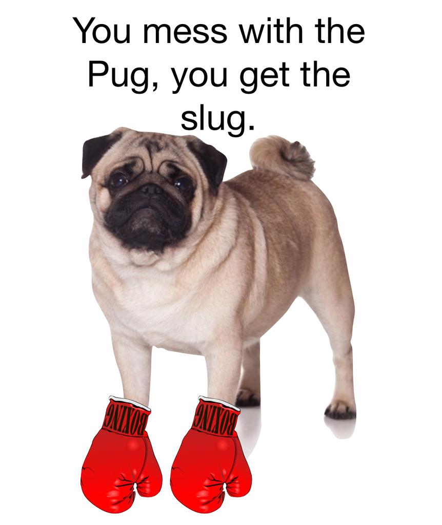 Puggo - meme