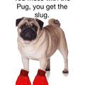 Puggo