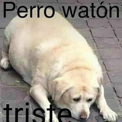 perro waton triste - meme