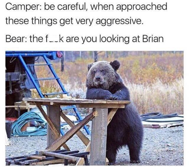 Bears can get very aggressive - meme