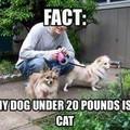 #doglivesmatter