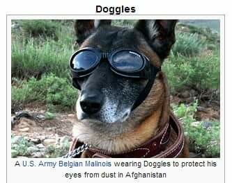 doggo needs doggles to dog ho's - meme
