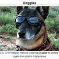 doggo needs doggles to dog ho's