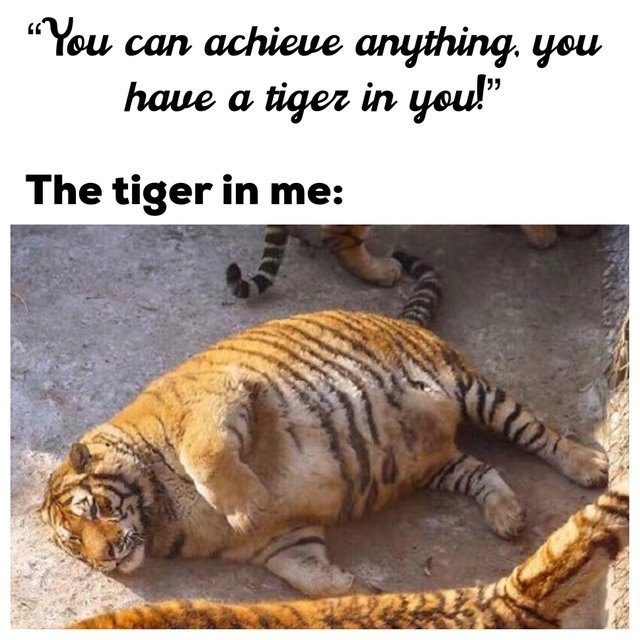 You can achieve anything, you have a tiger in you! - meme