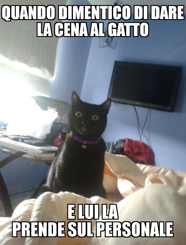 Gatti... - meme