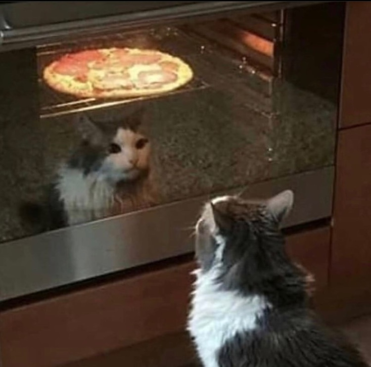 cat waiting for the pizza to be done - meme