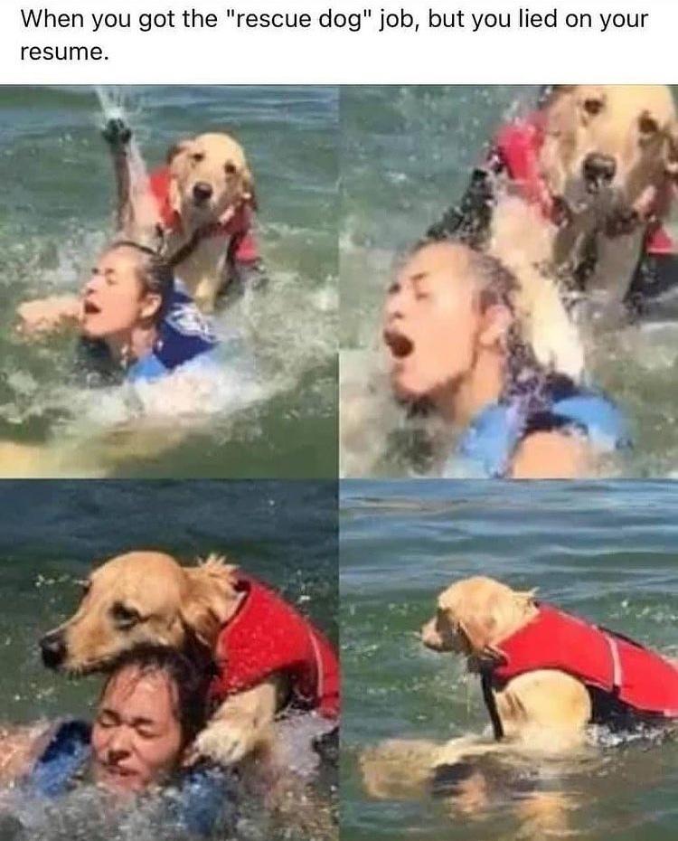 drown her - meme