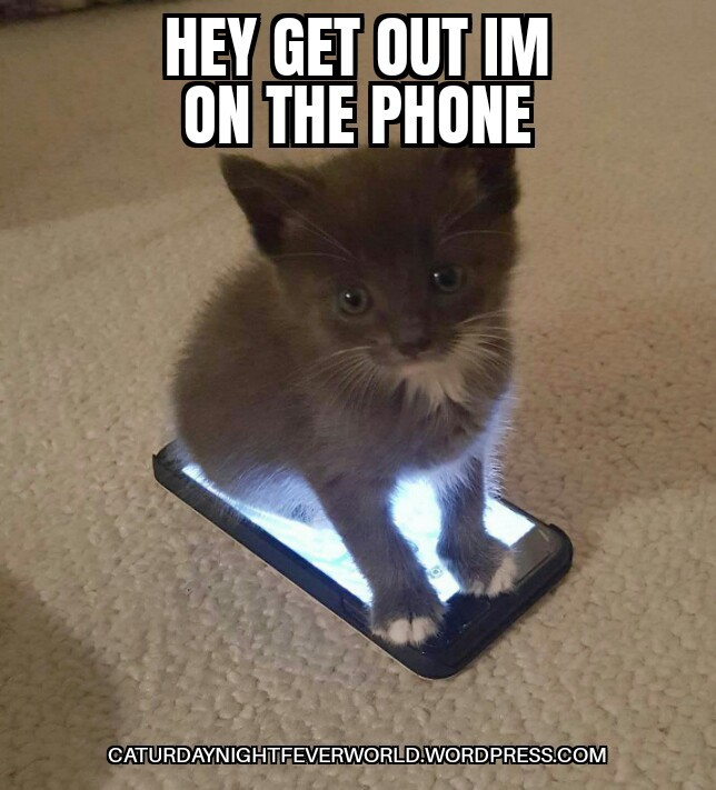 Cute kitty cat is on the phone - meme