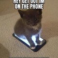 Cute kitty cat is on the phone