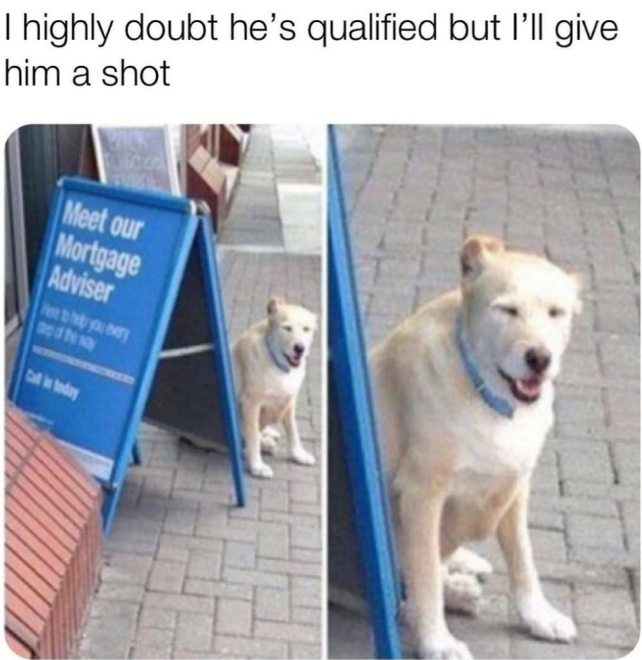 I trust dogs over people any day - meme