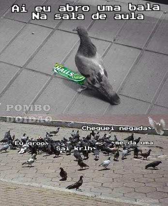 perolas dos Pombos PRUU - meme
