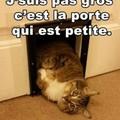 """Le """"petit"""" chat"""