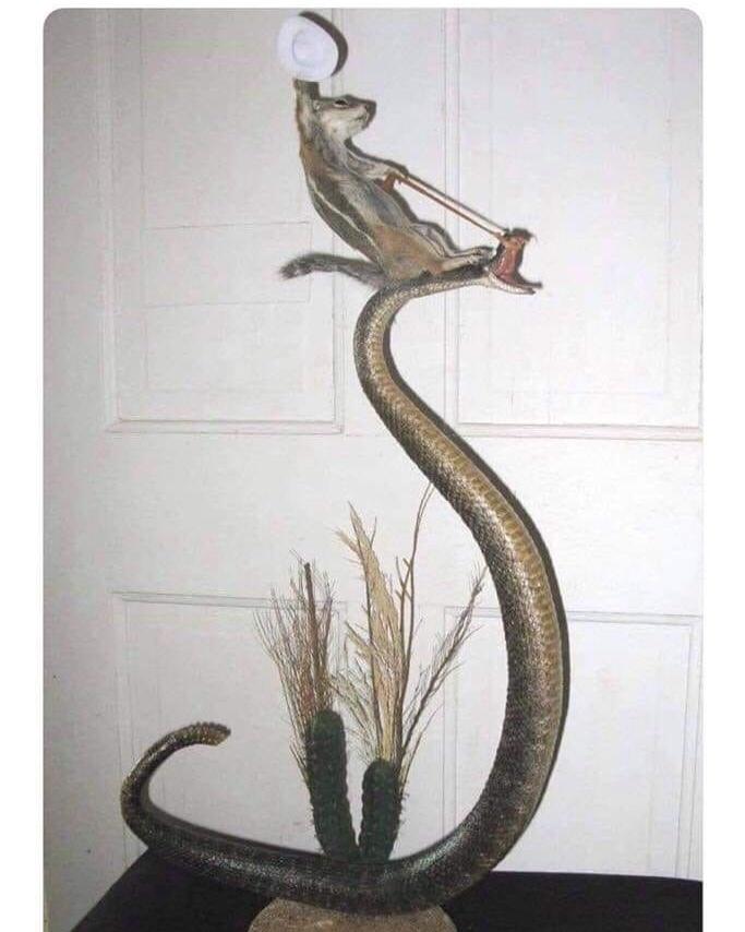 nada... que mi ardilla le gusta domar serpientes - meme