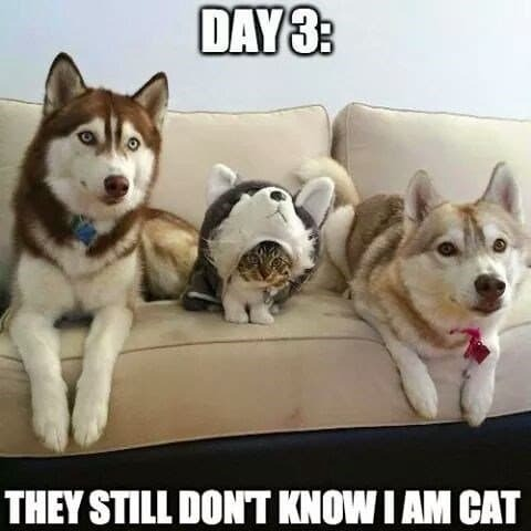 Cats when dogs take over. - meme