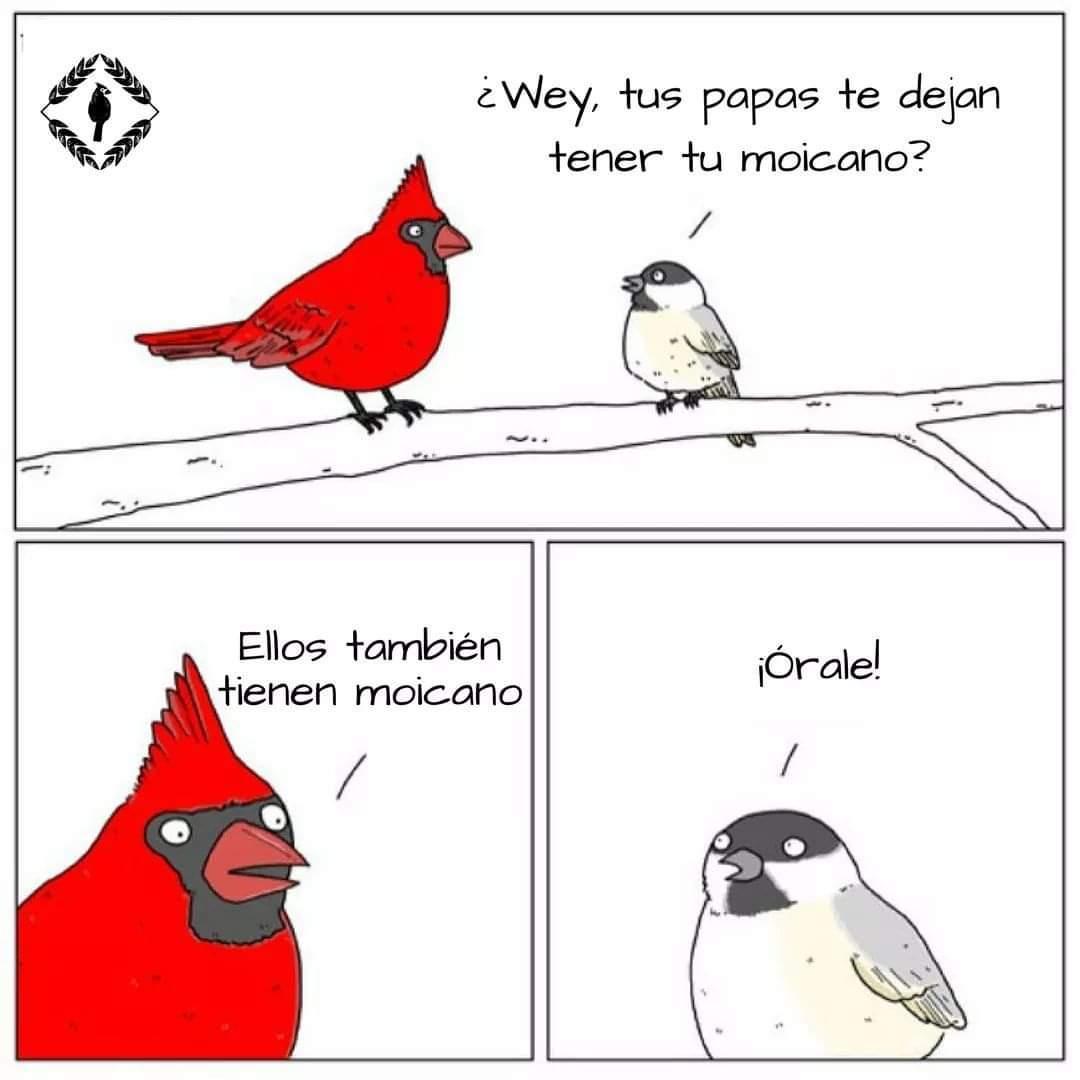 Orale - meme