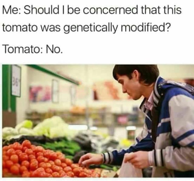 Genetically modified tomatos - meme