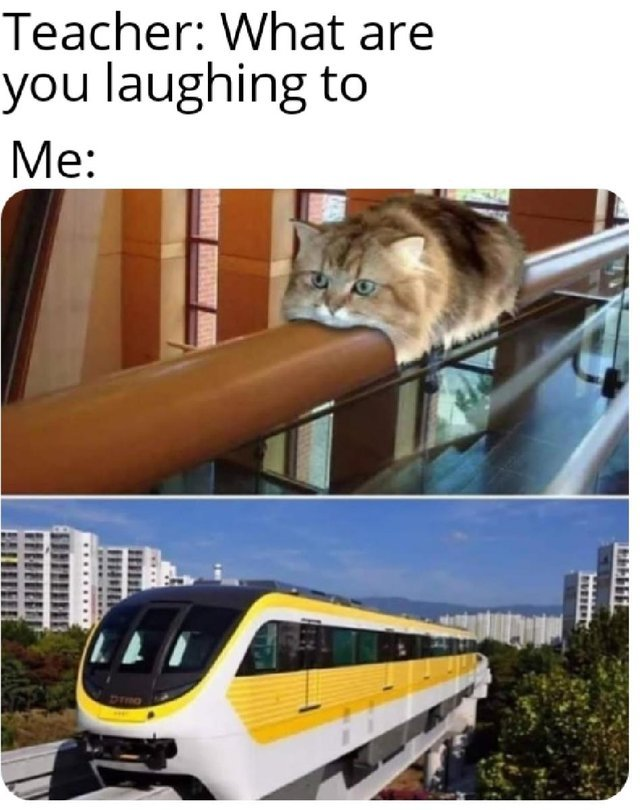 Train cat - meme