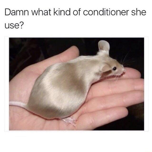 Rat hair conditioner - meme