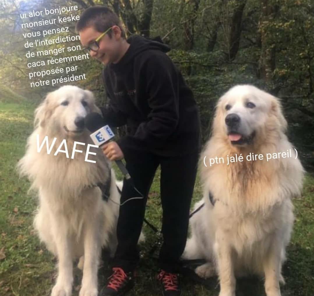 Wafe - meme