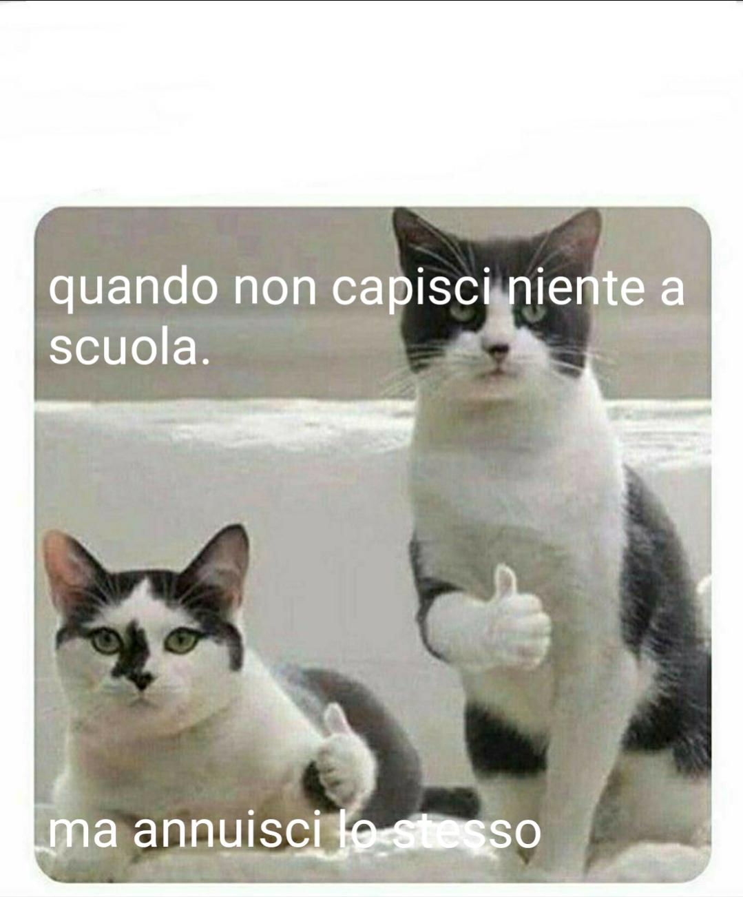 #succedeveramente - meme