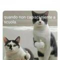 #succedeveramente