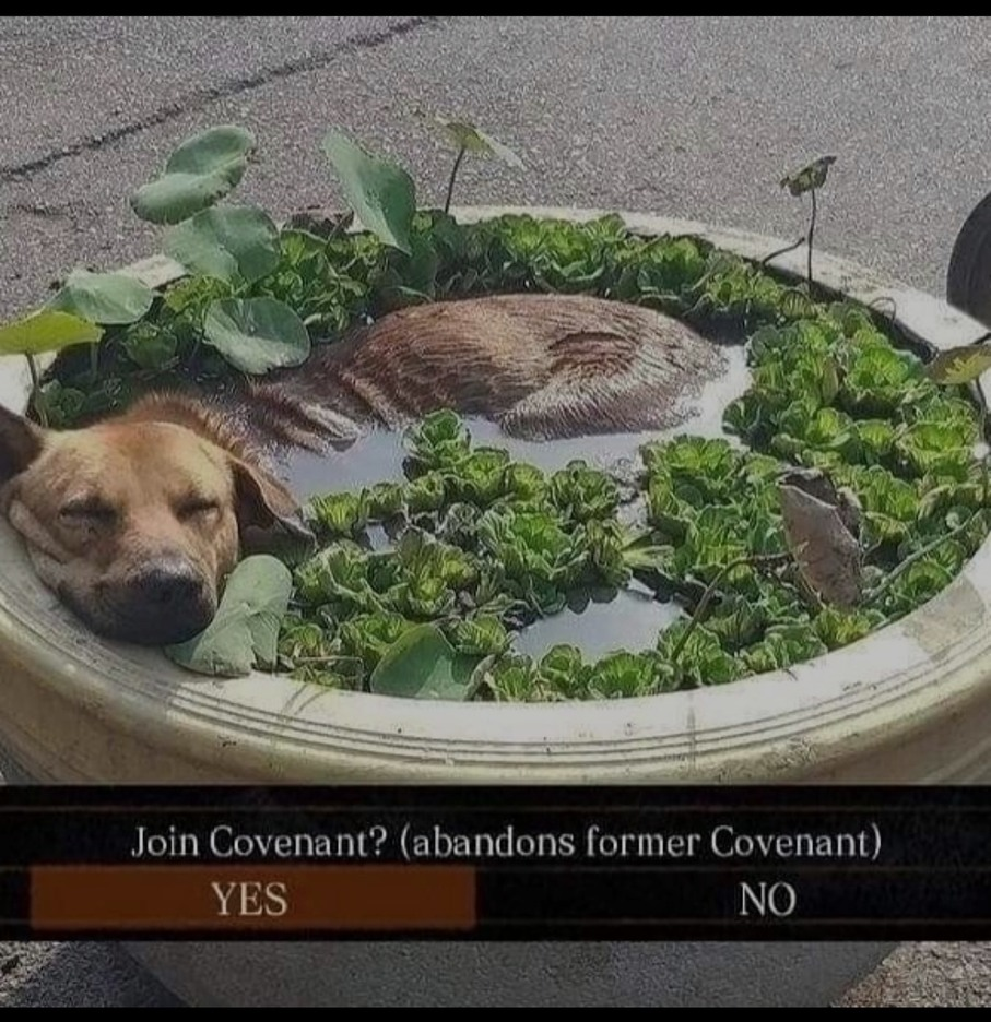 Vc joinaria a essa covenant? ¿ - meme