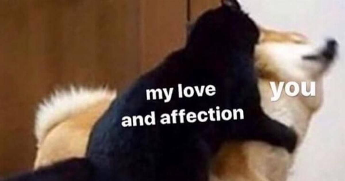 Love you guys so much - meme