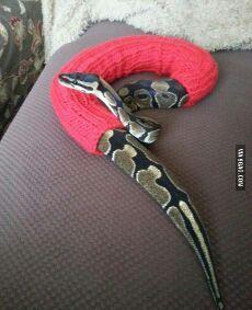mon serpent avait froid :3 - meme