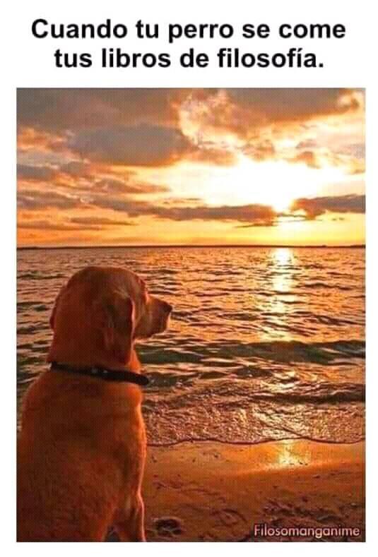 este perrito les desea bonito dia :D - meme