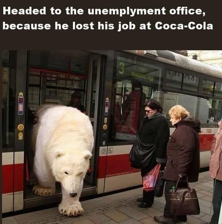 Poor bear - meme