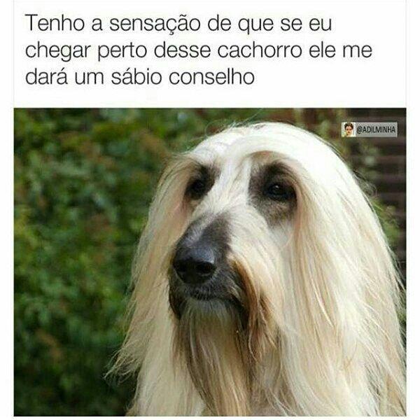Sábio cão - meme