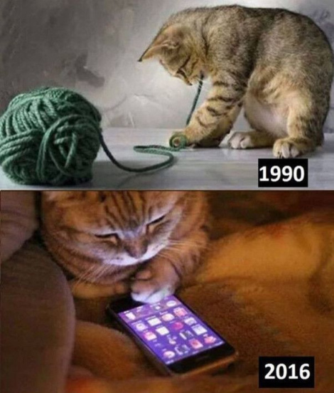 These younger generation of cats suck. - meme