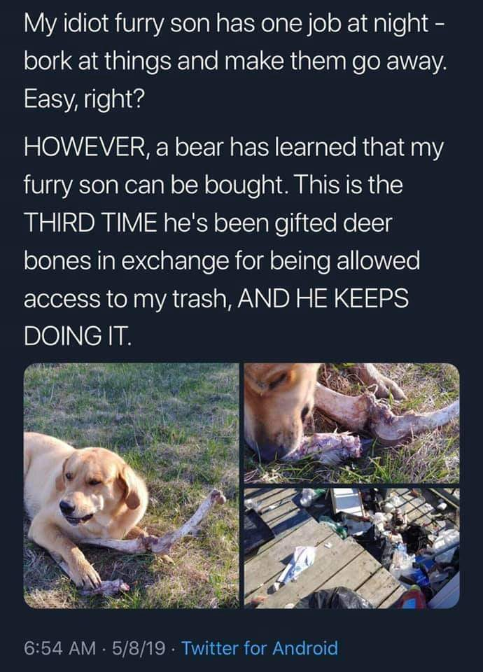 Furry son=doggo - meme