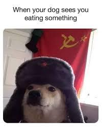 commie dog - meme