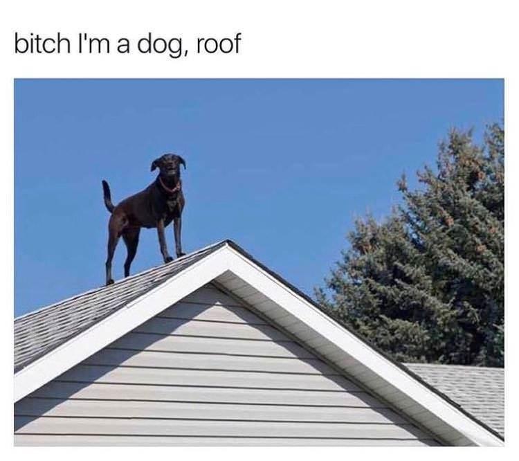 doggo...what doing? - meme