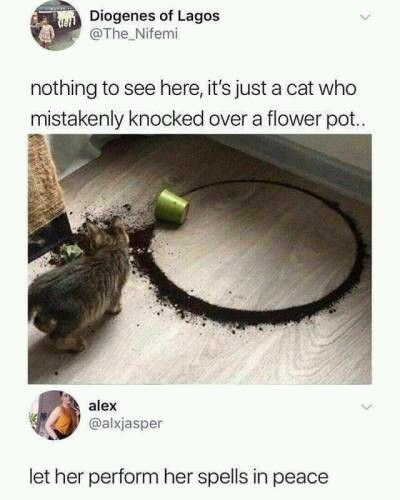 Cats into those magics - meme