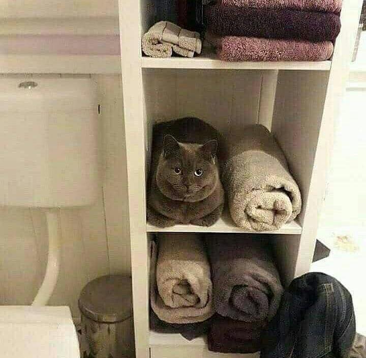 ¡genial! una toalla con forma de michi - meme