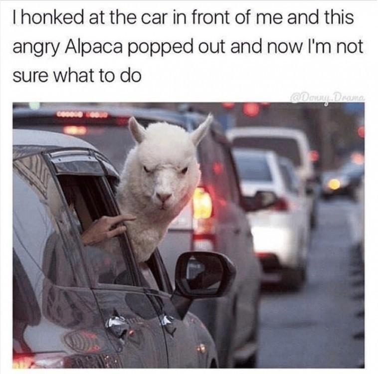 Angry Alpaca - meme