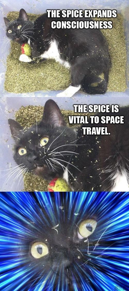 existential spices - meme