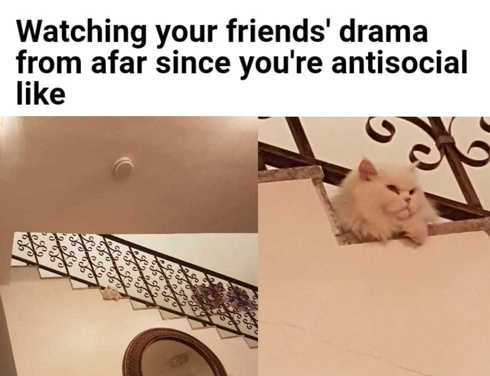 My cat, Teddy - meme