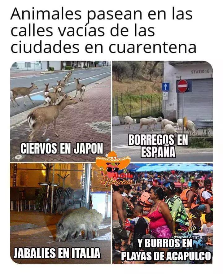 Estupidos - meme