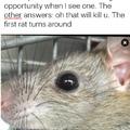 suicidal rat