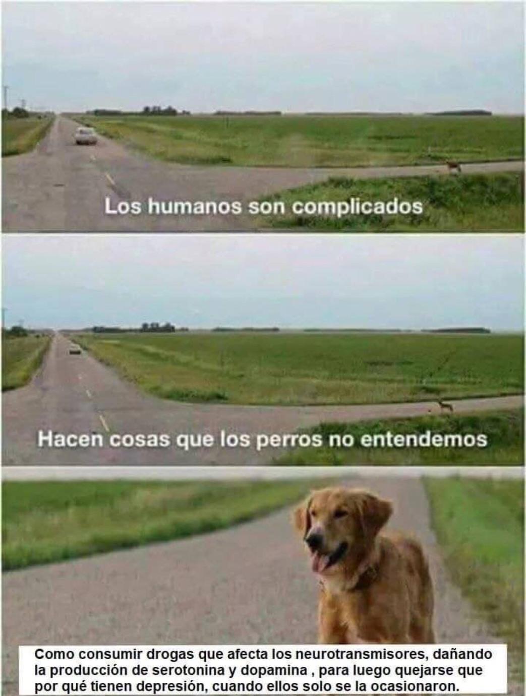 humanos.. :/ - meme